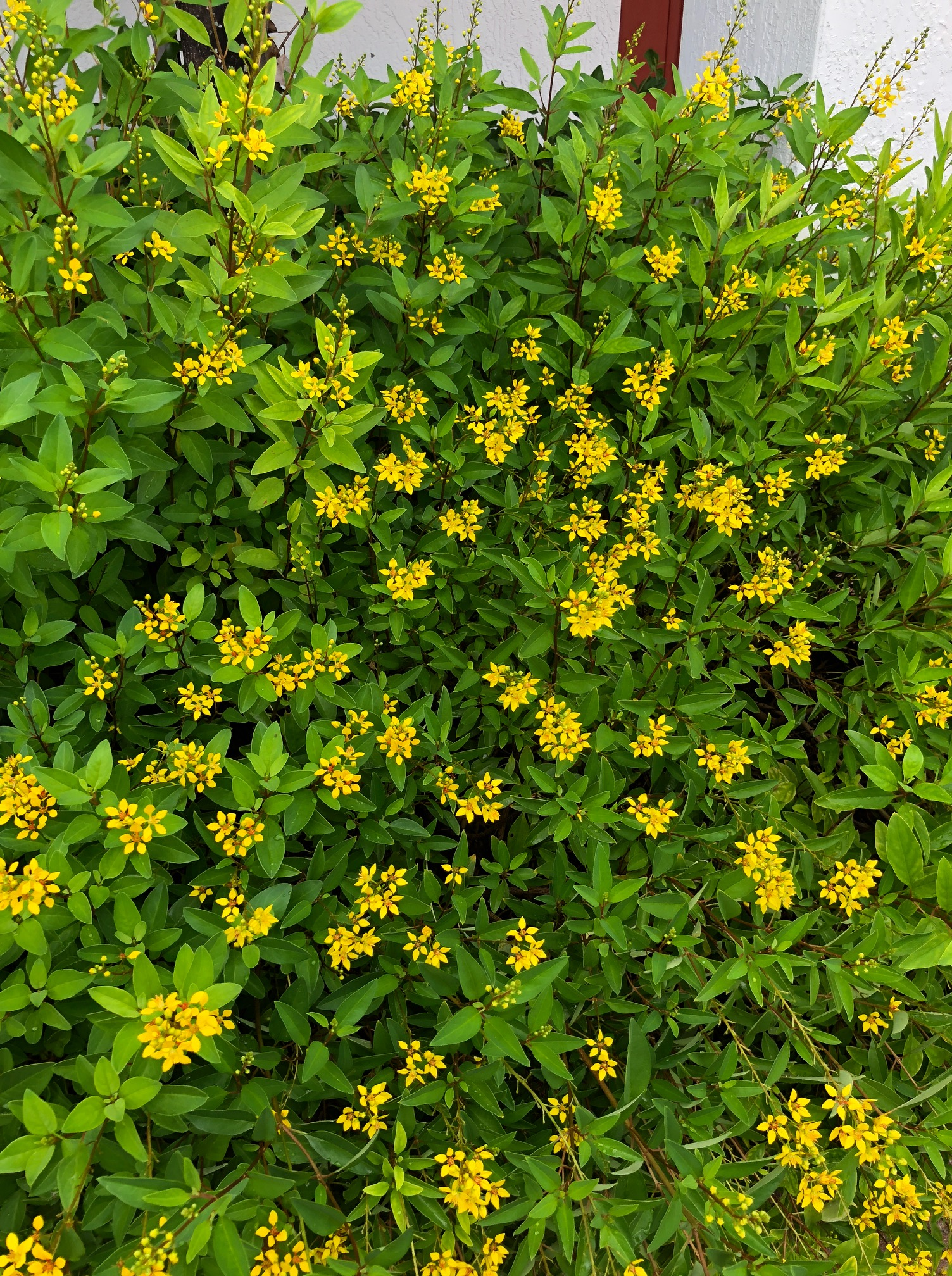 yellow flowers.JPG