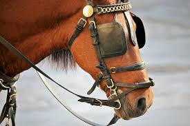 a horse with blinders on